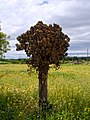 Casi árbol (110423015).jpeg