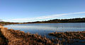 Castle Semple Loch - geograph.org.uk - 43.jpg