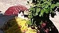 Cat in the nest.jpg