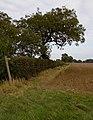 Catwick Heads footpath - geograph.org.uk - 1497706.jpg