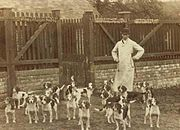 The Caynsham Foot Beagles (c.1885)