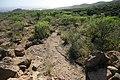 Cazoletas y canales guanches. - panoramio.jpg