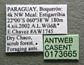 Cephalotes borgmeieri casent0173665 label 1.jpg