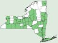 Chelidonium majus var majus NY-dist-map.png