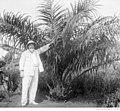 Chercheur européen présentant un palmier à huile sur la station de Pobé.jpg