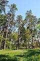 Cherkasy Sosnivka Park 12.JPG