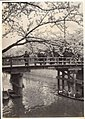 Cherry Blossoms, Bridge and River, in Japan (1914 by Elstner Hilton).jpg