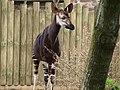 Chester Zoo (9484585887).jpg