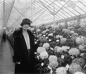 William Marion Jardine - William M. Jardine's wife, Effie Nebeker, photographed by chrysanthemums November 5, 1925.