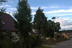 Ciconia ciconia nest Ugoszcz.jpg
