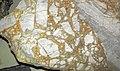 Collapse breccia (Everton Formation, Middle Ordovician; Rush Creek District, Arkansas, USA) 2.jpg