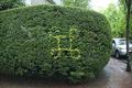 Commandkey hedge.png