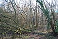 Coppicing in Binswood - geograph.org.uk - 1207175.jpg