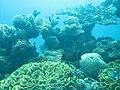 Coral World Underwater Observatory 27.jpg