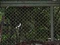 Costa Rica (6094259993).jpg