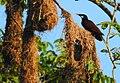 Costa Rica 36.DSCN3739-new (30761832980).jpg