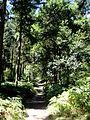 Coyolles (60), laie de la Croix Blanche en forêt de Retz 2.jpg