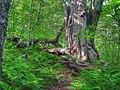 Craggy Gardens Trail - panoramio (1).jpg