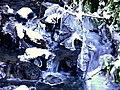 Creek (058a8281f44e47358d3b5b26dd5fdfe4).JPG