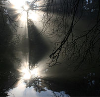 Crepuscular Rays and their reflection