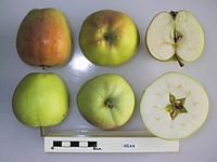 Cross section of Silva, National Fruit Collection (acc. 1978-389).jpg
