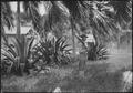 Cuba, Guantanamo Sentry beneath palms., 1919 - NARA - 532583.tif