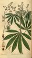 Curtis's Botanical Magazine, Plate 3071 (Volume 58, 1831).png