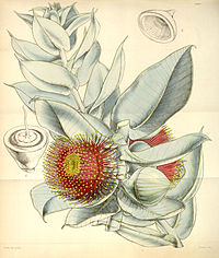 Curtis's Botanical Magazine, Plate 4333 (Volume 73, 1847)