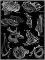 Cyanobacterial microfossils.jpg