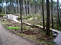 Cycle Trail in Dalbeattie Forest - geograph.org.uk - 392798.jpg