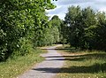 Cycle track, Aller Brook Local Nature Reserve - geograph.org.uk - 1954791.jpg