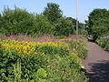 Cyclepath - geograph.org.uk - 90151.jpg