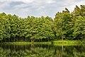 """Dülmen, Börnste, Naturschutzgebiet """"Franzosenbach"""" -- 2020 -- 7847.jpg"""