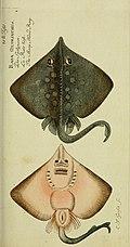 D. Marcus Elieser Bloch's, ausübenden Arztes zu Berlin Ökonomische Naturgeschichte der Fische Deutschlands - mit sieben und dreyssig Kupfertafeln nach Originalen (1783) (20794964858).jpg