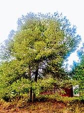DSC 0441 Vegetacion.jpg