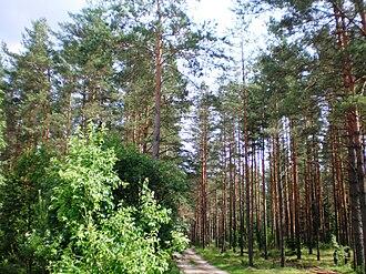 Dainava Forest - Image: Dainavos giria 001