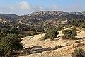 Dana Nature - panoramio (4).jpg