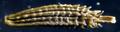 Dandelion Seed (49975421627).png