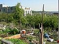 Danny Woo Community Garden 11.jpg