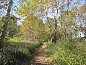 Delta, British Columbia - A trail on Deas Island in late September