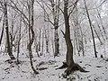 December - panoramio (2).jpg