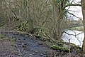 Deep Dale Syke meets the River Ribble - geograph.org.uk - 357429.jpg