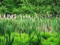 Deep In the Swamp (7395921934).jpg
