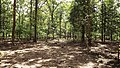 Deer Park and reserve forest @ Walayar - panoramio (5).jpg