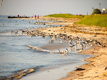 English: Delaware Bay shoreline at Villas, on ...