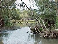 Typical landscape in the Danube Delta