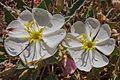 Desert flora of the Moab, Utah area (16060416825).jpg