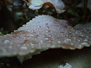 Dew - Dew drops on a leaf