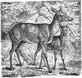 Die Gartenlaube (1859) b 413.jpg