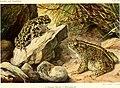 Die Reptilien und Amphibien mitteleuropas (1912) (20932769462).jpg